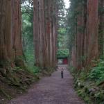4 Tagakushi Pine Forest, Nagano