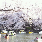 Spring1 Inokashira Park, Tokyo
