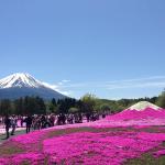 Spring3 Shibazakura, Yamanashi