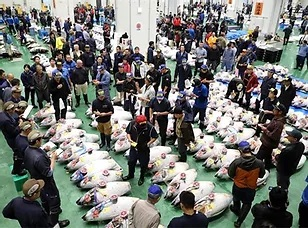 Tuna Auction at Toyosu Fishmarket