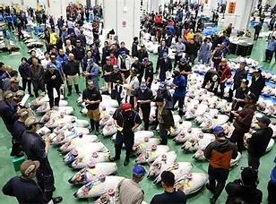 Tuna Auction at Toyosu Fishmarket